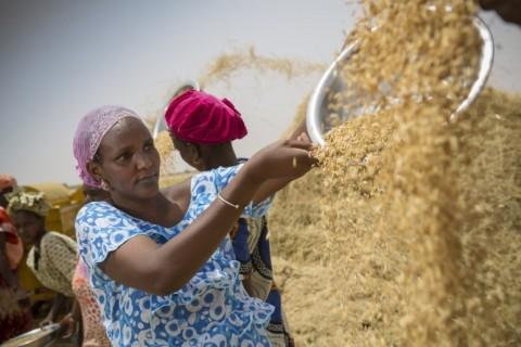 La femme sénégalaise sait se battre pour ses objectifs