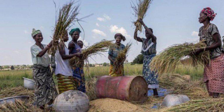 femmes_afrique_agro